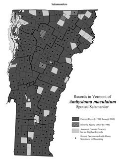 Distribution of Ambystoma maculatum in Vermont