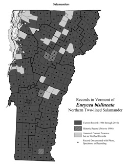 Distribution of Eurycea bislineata in Vermont