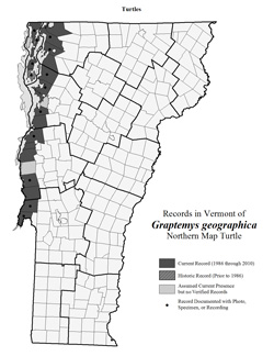 Distribution of G. geographica in Vermont