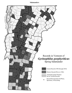 Distribution of Gyrinophilus porphyriticus in Vermont