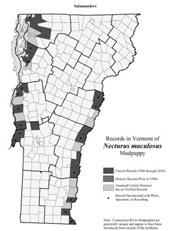 Distribution of Necturus maculosus in Vermont