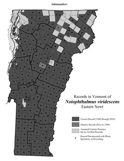 Distribution of Notophthalmus viridescens in Vermont