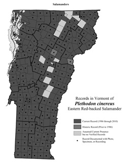 Distribution of Plethodon cinereus in Vermont
