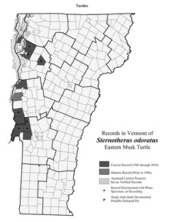 Distribution of S. odoratus in Vermont
