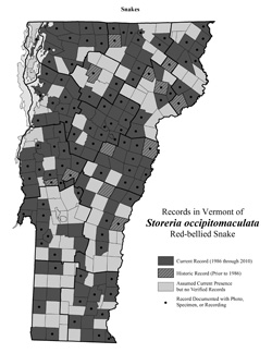 Distribution of S. occipitomaculata in Vermont