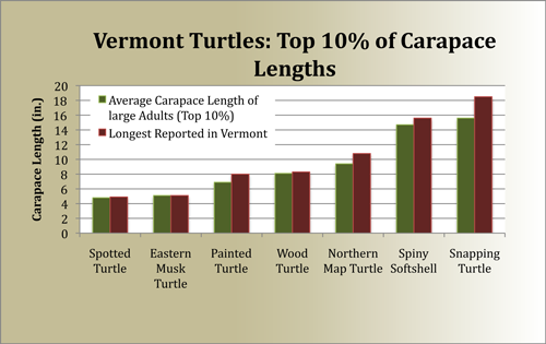 Vermont's Reported Turtle Carapaces