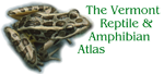 Home: The Vermont Reptile and Amphibian Atlas [logo: R. palustris]